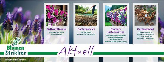 Blumen Stricker - Aktuell