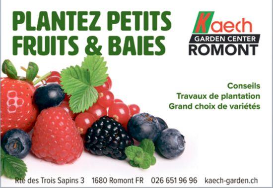 Kaech Garden Center, Romont, Planter petits fruits & Baies