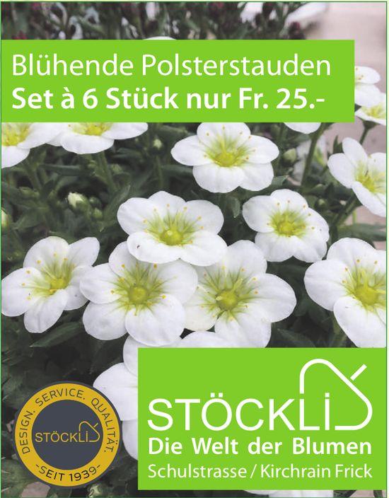 Stöckli: Die Welt der Blumen - Blühende Polsterstauden Set à 6 Stück nur Fr. 25.