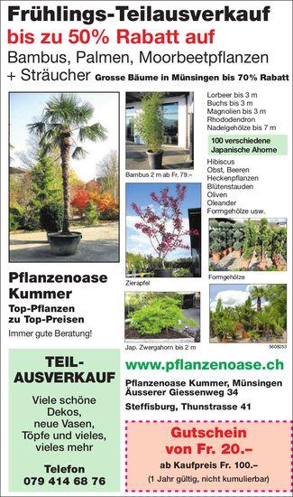 Frühlings-Teilausverkauf, Pflanzenoase Kummer, Münsingen & Steffisburg