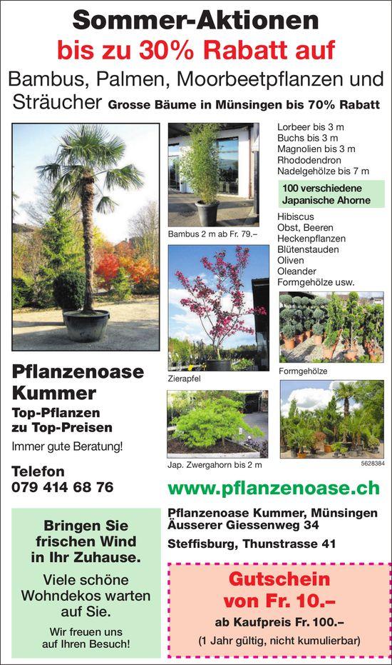 Sommer-Aktionen, Pflanzenoase Kummer, Steffisburg & Münsingen