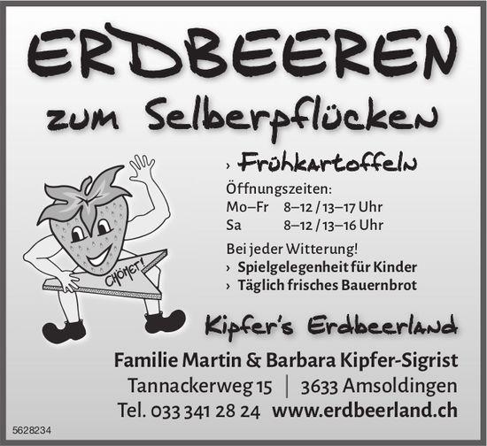 ERDBEEREN zum Selberpflücken bei Kipfer's Erdbeerland, Amsoldingen