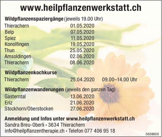 Wildpflanzenspaziergänge,  Wildpflanzenkochkurse..., ab 1. Mai, Heilpflanzenwerkstatt, Thierachern