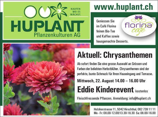 HUPLANT Pflanzenkulturen AG, Hirschthal - Aktuell: Chrysanthemen & Eddie Kinderevent, kostenlos