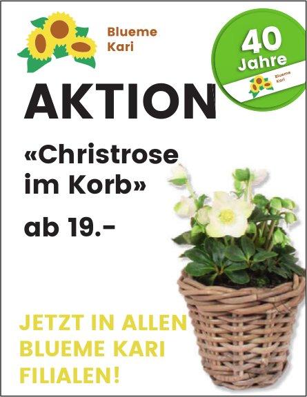 Blueme Kari - Aktion «Christrose im Korb» ab 19.-