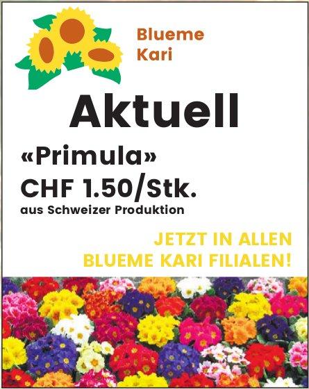 Blueme Kari - Aktuell: «Primula» CHF 1.50/Stk.