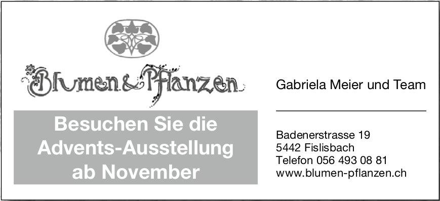 Blumen & Pflanzen Gabriela Meier - Besuchen Sie die Advents-Ausstellung ab November
