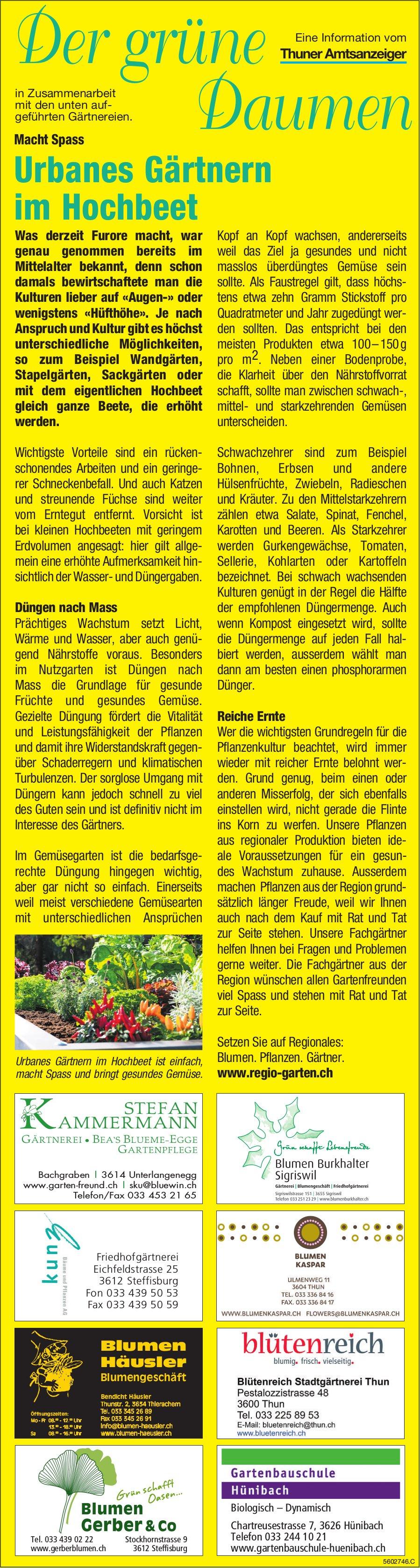 Der grüne Daumen - Urbanes Gärtnern im Hochbeet