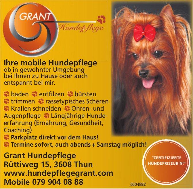 Grant Hundepflege - Ihre mobile Hundepflege