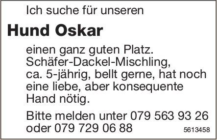 Ich suche für unseren Hund Oskar einen ganz guten Platz.