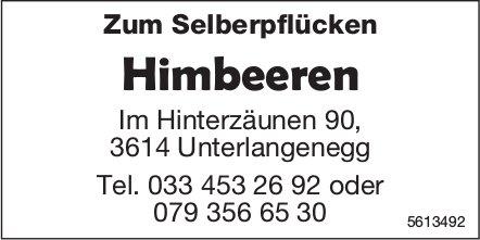 Himbeeren zum Selberpflücken in 3614 Unterlangenegg