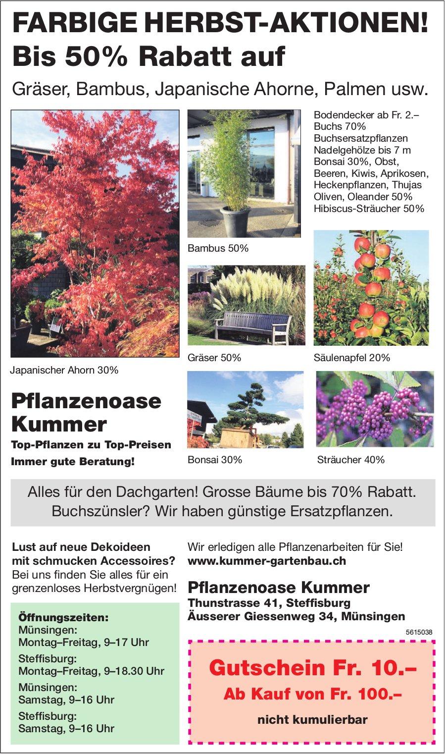 Pflanzenoase Kummer - FARBIGE HERBST-AKTIONEN! Bis 50% Rabatt