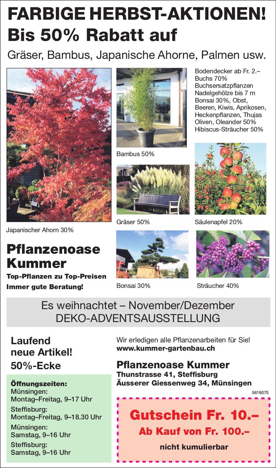 DEKO-ADVENTSAUSSTELLUNG, FARBIGE HERBST-AKTIONEN!, Pflanzenoase Kummer, Steffisburg und Münsingen