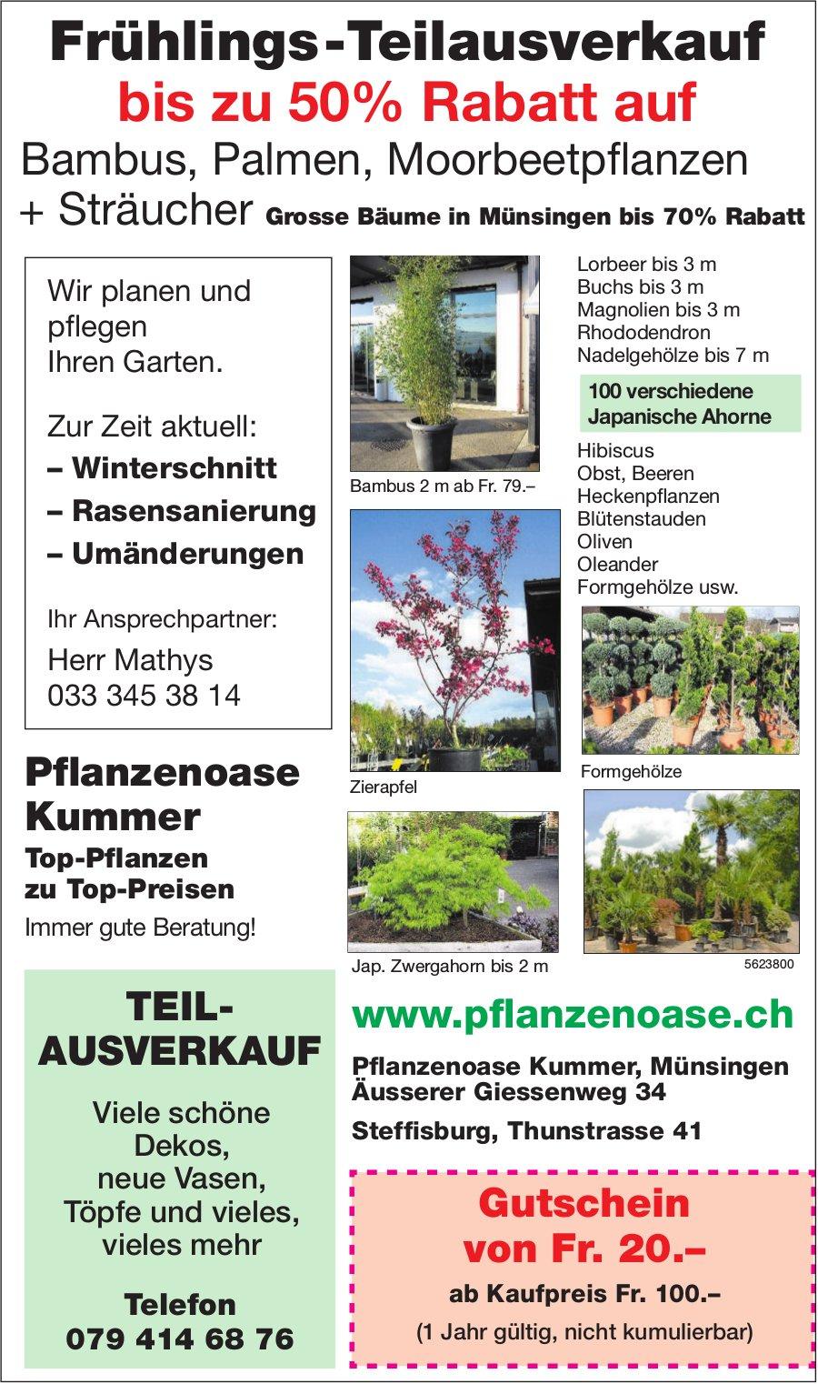 Pflanzenoase Kummer - Frühlings-Teilausverkauf bis zu 50% Rabatt