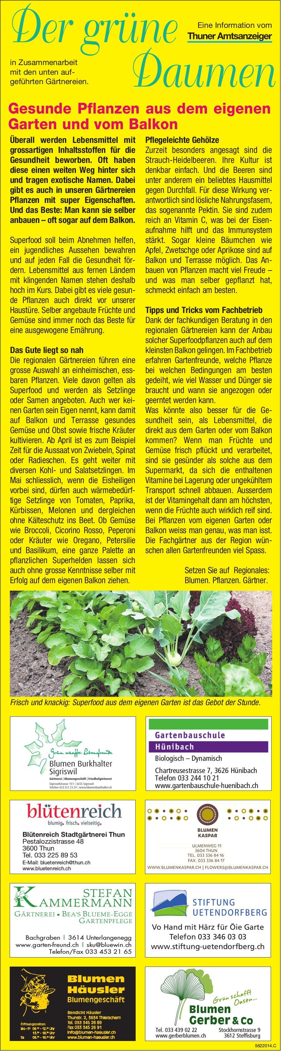 Der grüne Daumen - Gesunde Pflanzen aus dem eigenen Garten und vom Balkon