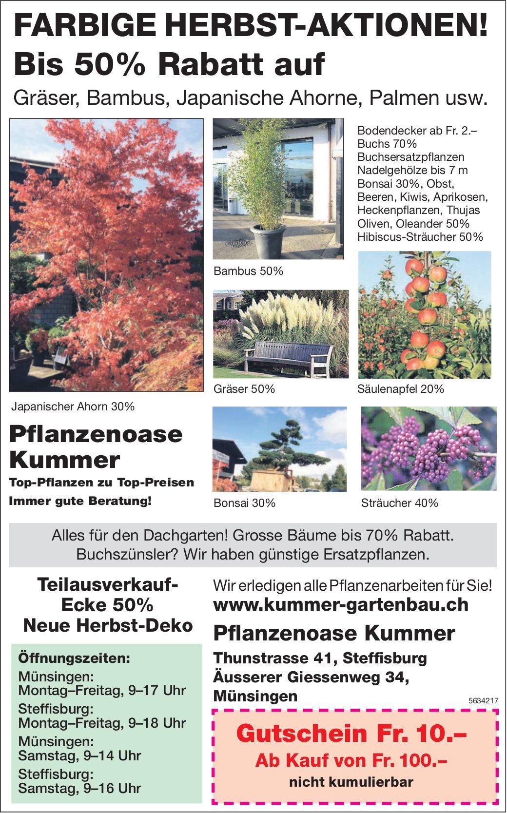Pflanzenoase Kummer - FARBIGE HERBST-AKTIONEN!