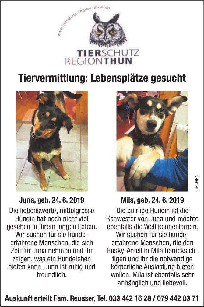 Tierschutz Region Thun - Tiervermittlung: Lebensplätze gesucht